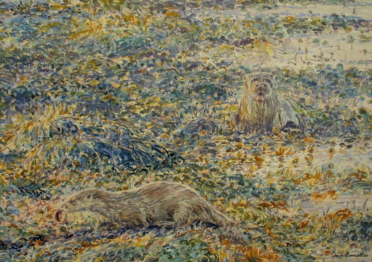 Otter family hunting in bladderwrack, Mull, Watercolour on paper, 70cm x 50cm
