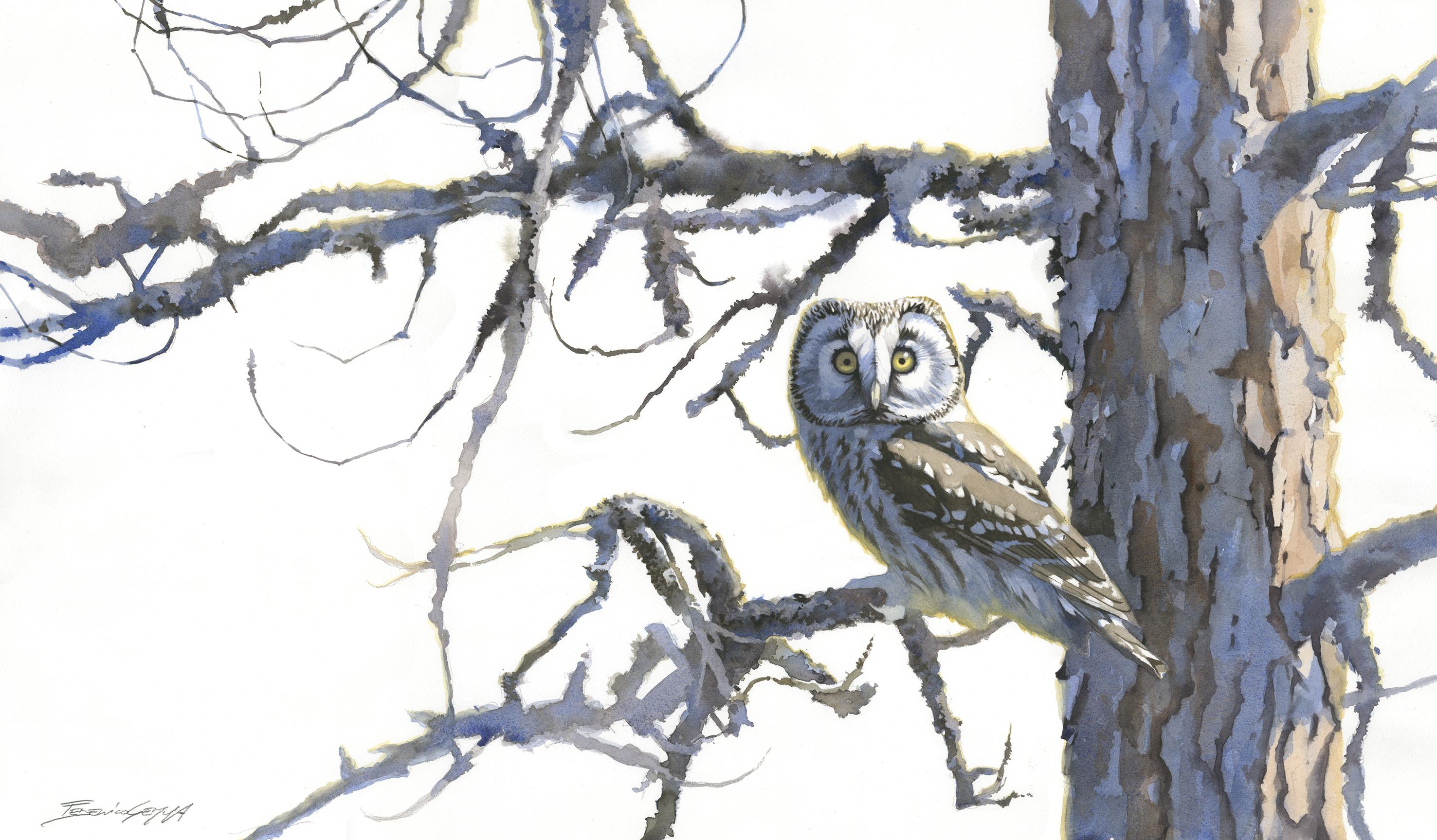 Tengmalm's Owl, Finland, Watercolour, 58 x 89 cm