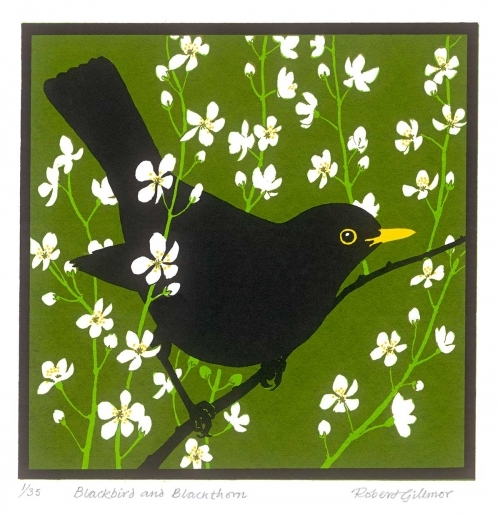 <p>Blackbird and blackthorn by Robert Gillmor</p>