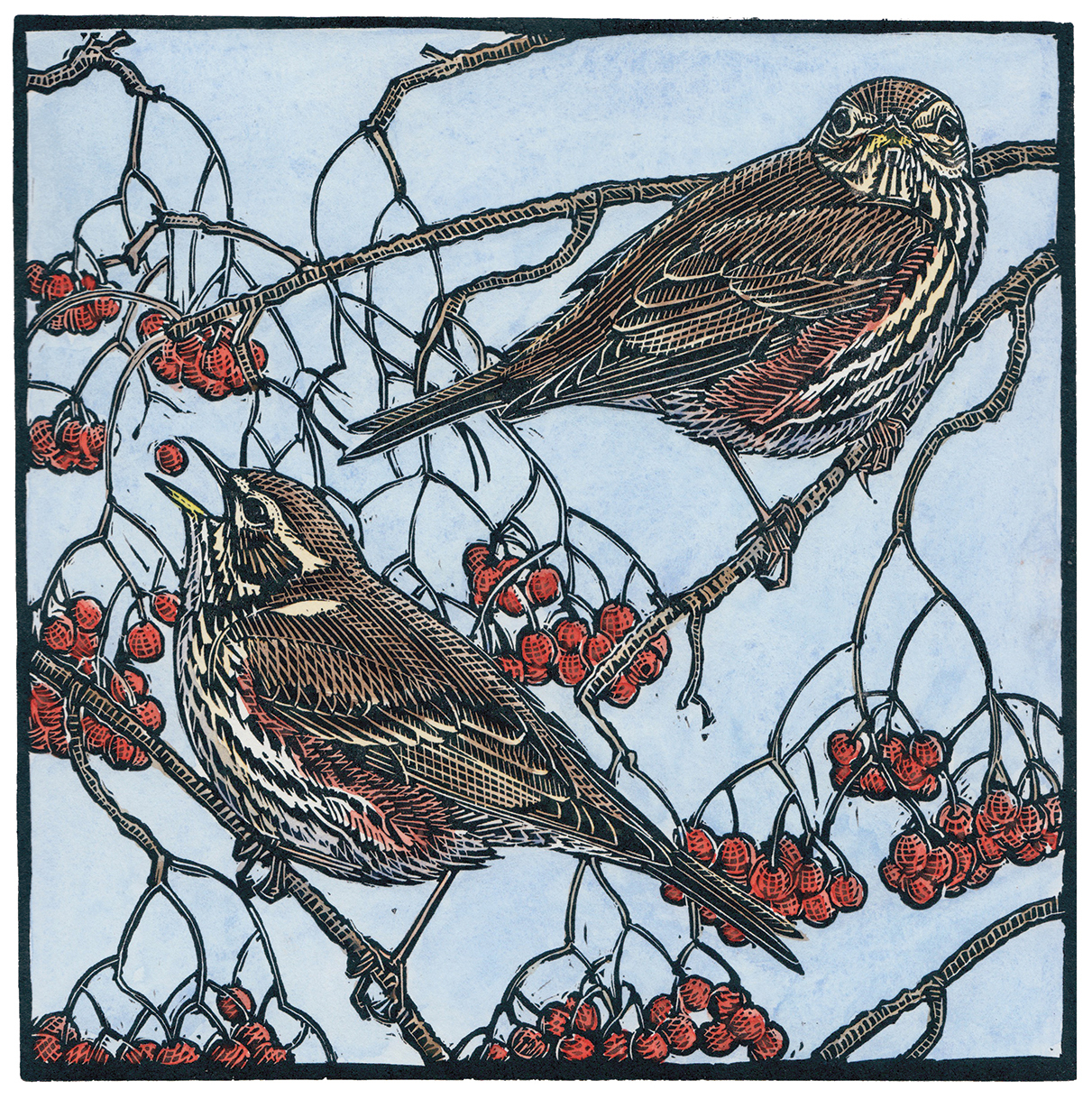 Redwings, Linocut and watercolour, 38 cm x 38 cm