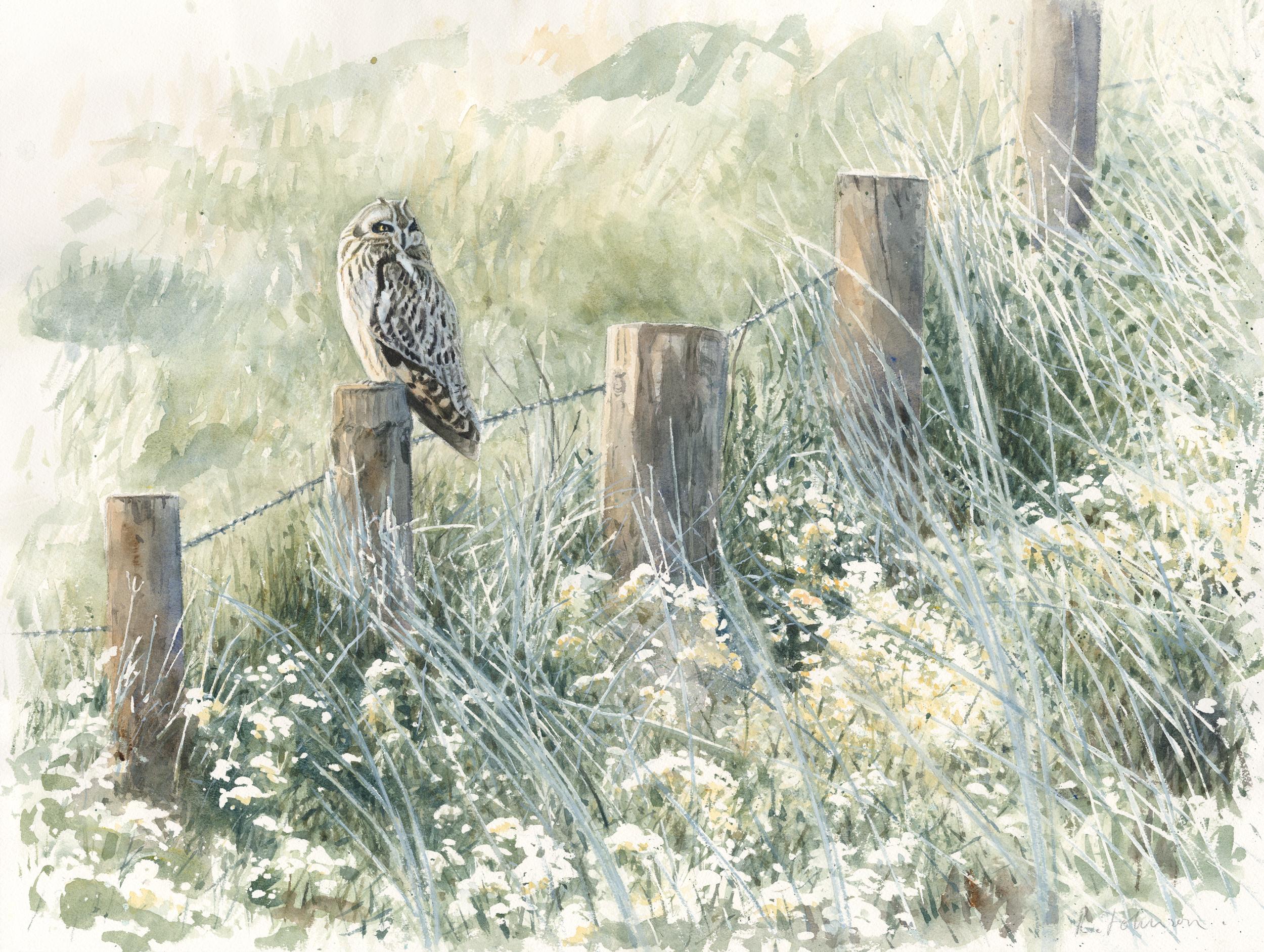 Short-eared Owl, Burwell Fen, Watercolour, 63 x 79 cm