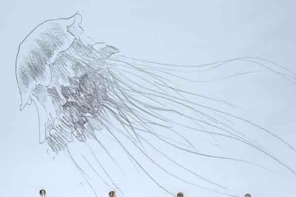 <p>Jellyfish sketch</p>