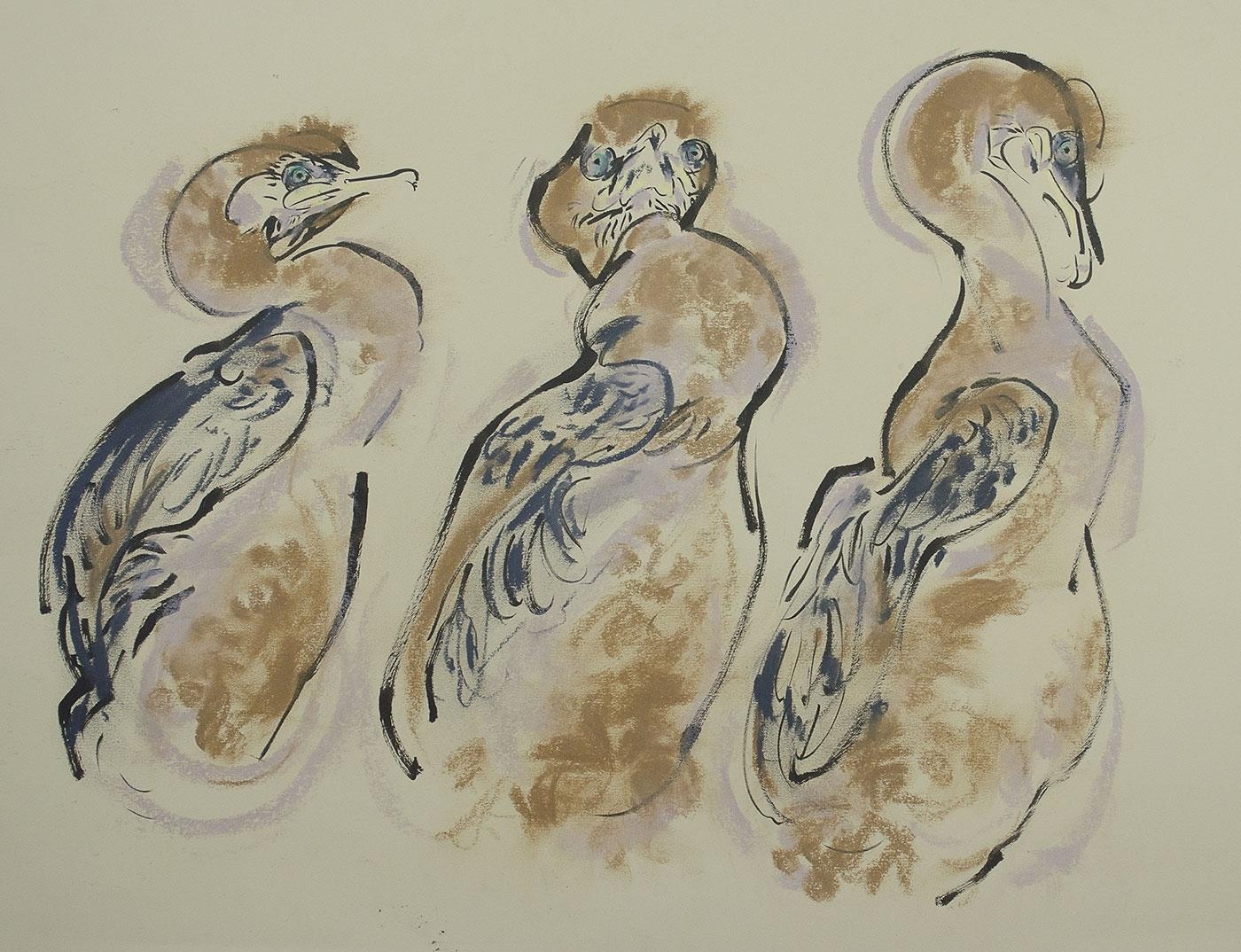 <p><em>Three Shag chicks</em></p>
