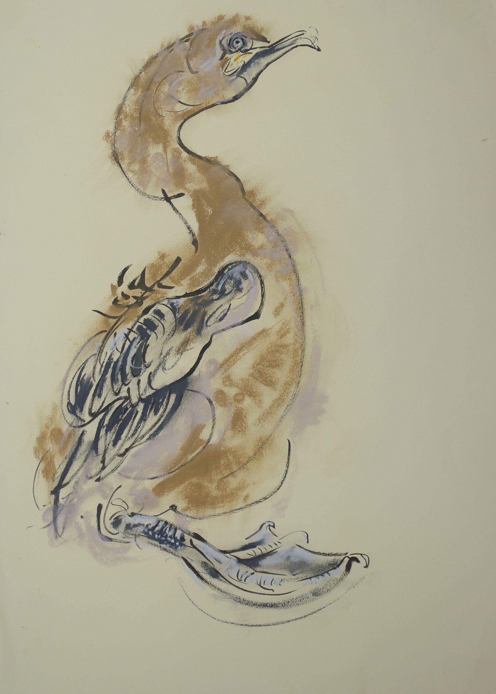 Shag chick, Fidra, Ink and soft pastel, 59 cm x 42 cm
