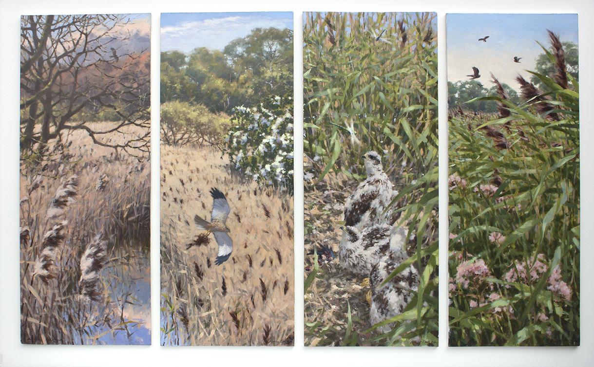 Marsh Harrier Seasons, Oil on Panel