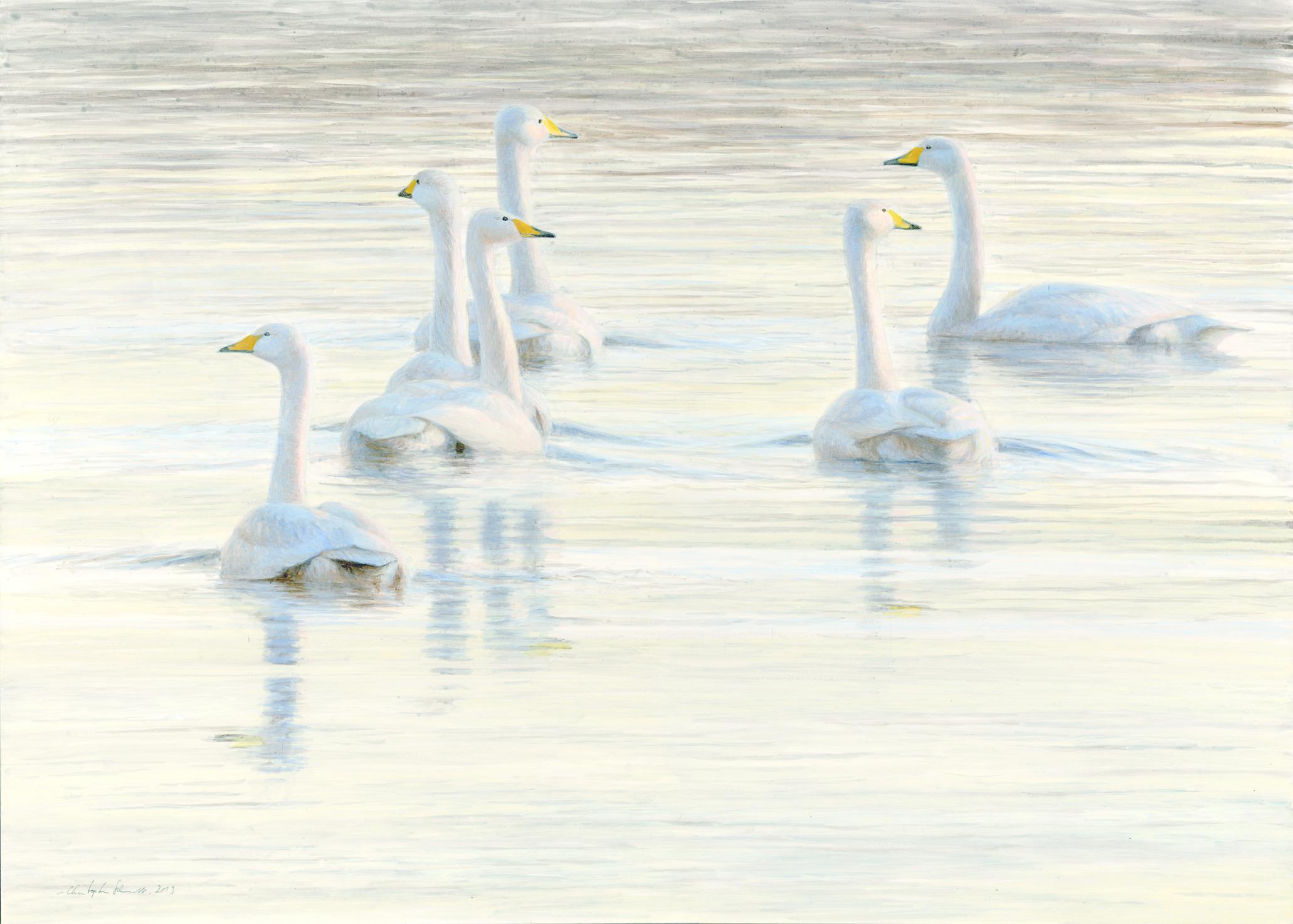 Whooper Swans, Acrylic, 50 cm x 70 cm
