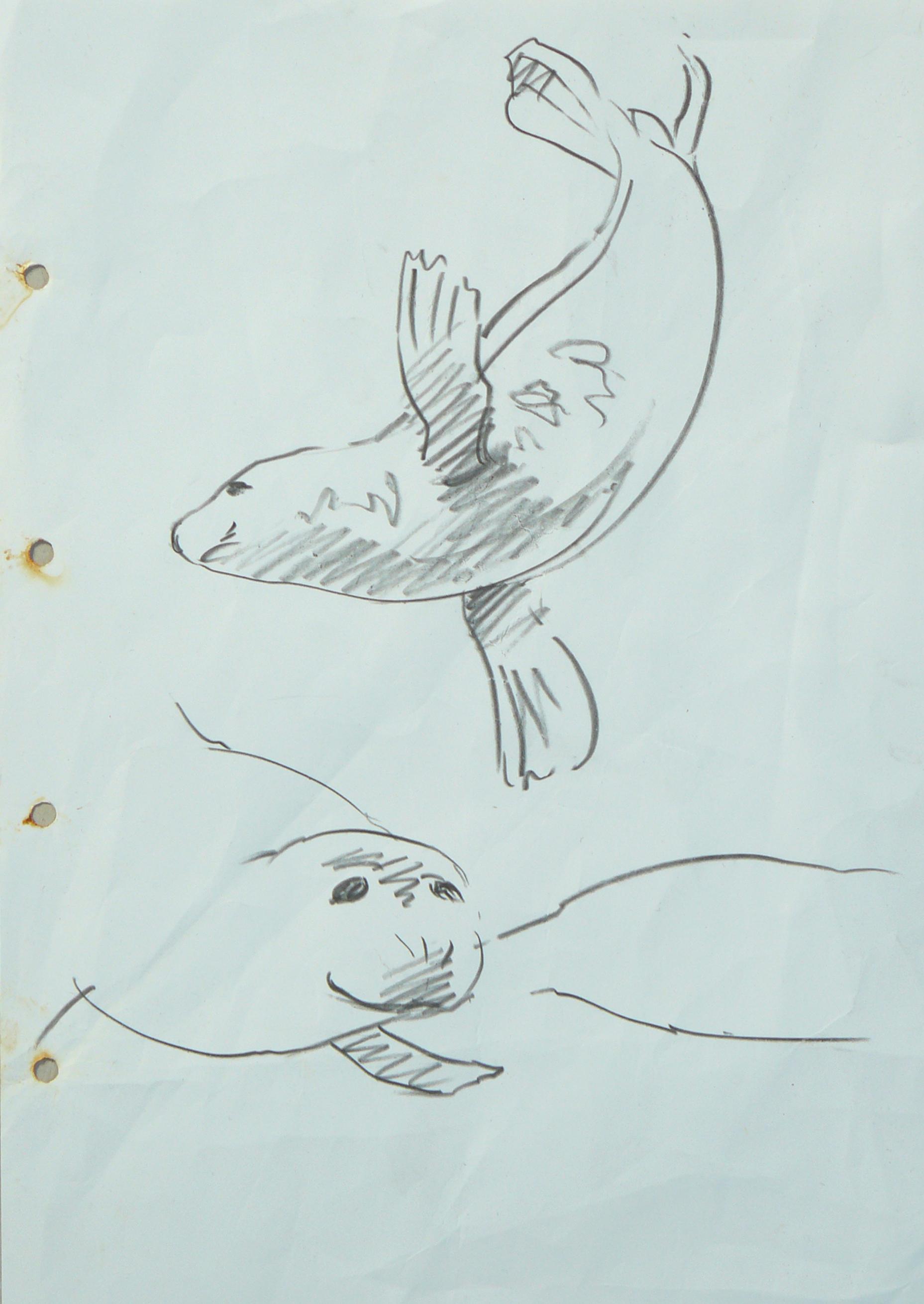<p>Seal sketch, Chris Rose</p>