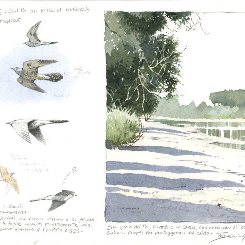 Cuckoo flight and landscape, Federico Gemma