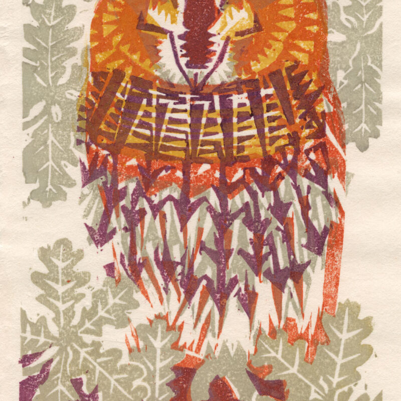 Tawny Owl by Matt Underwood