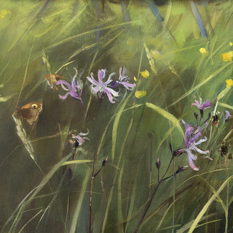 Meadow Brown and Ragged Robin by Fiona Clucas