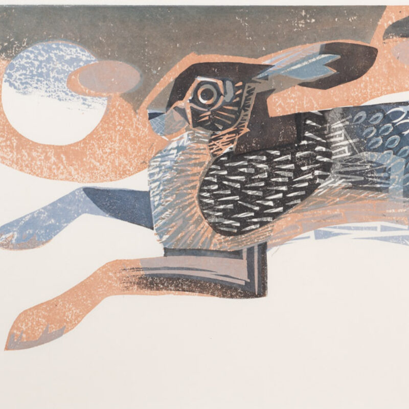 Hare by Matt Underwood