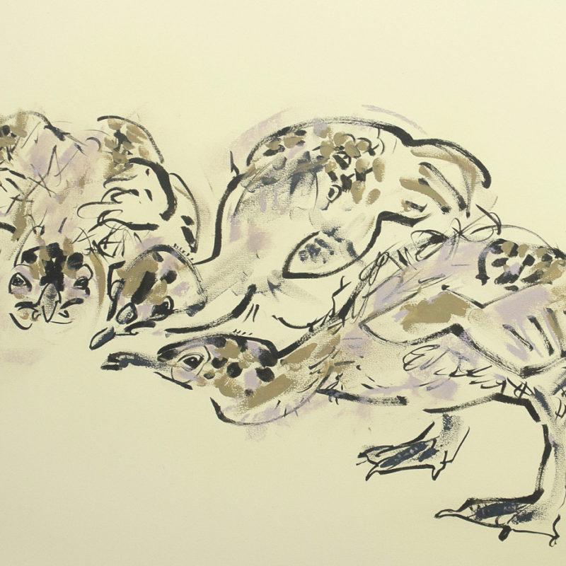 Herring Gull Chicks © Wynona Legg