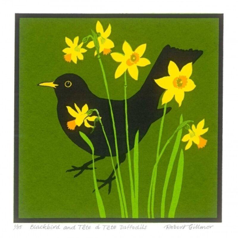 Blackbird and tete a tete daffodils by Robert Gillmor
