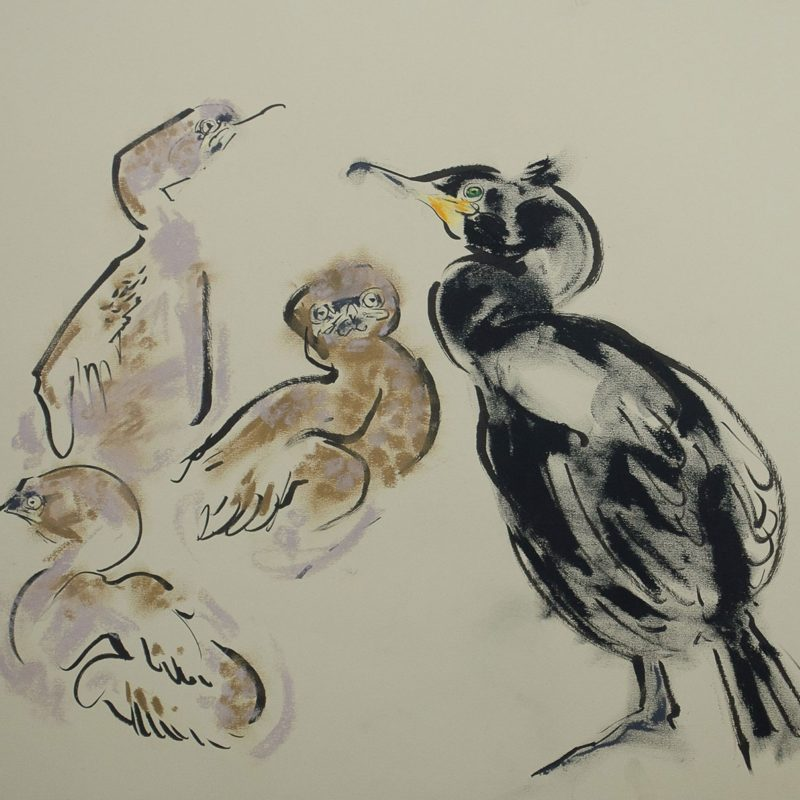 Shag with chicks by Wynona Legg © Wynona Legg