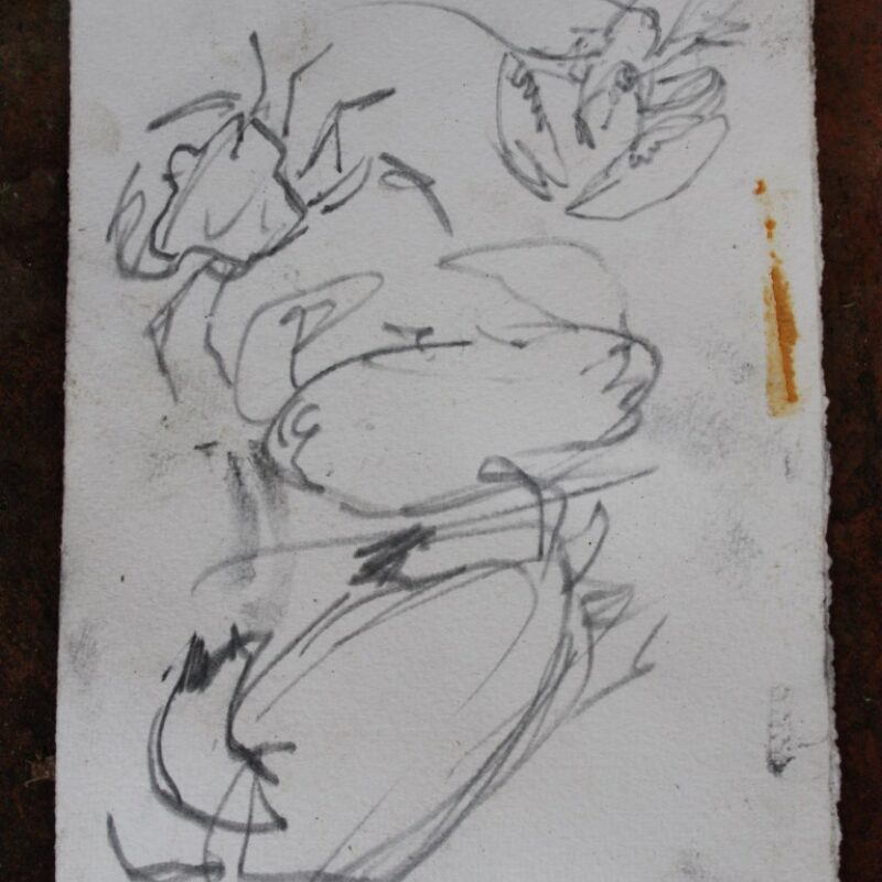Harriet Mead, lobster and crab underwater sketch