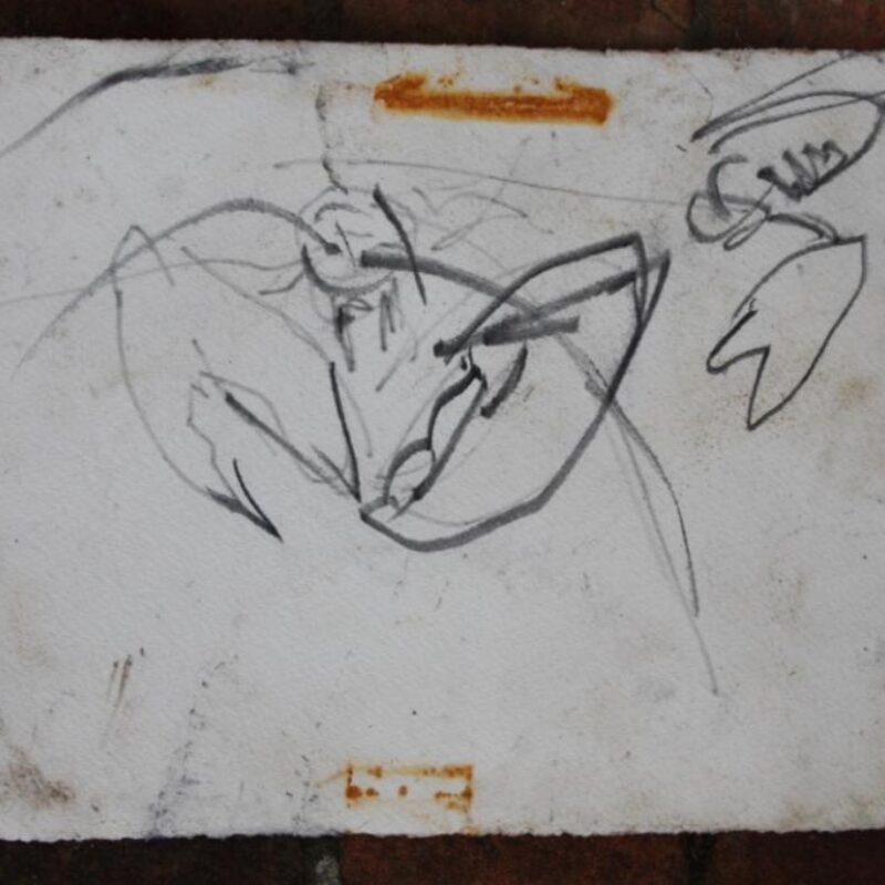 Harriet Mead, underwater lobster sketch