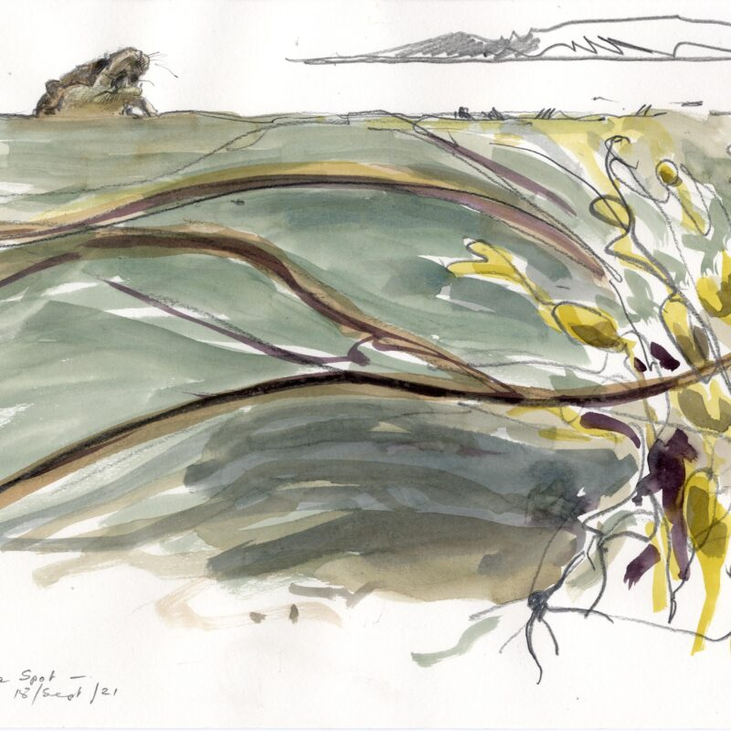 Otter and seaweed, Bruce Pearson