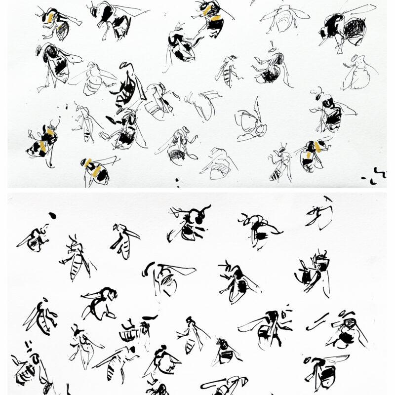 Bee studies by Nik Pollard