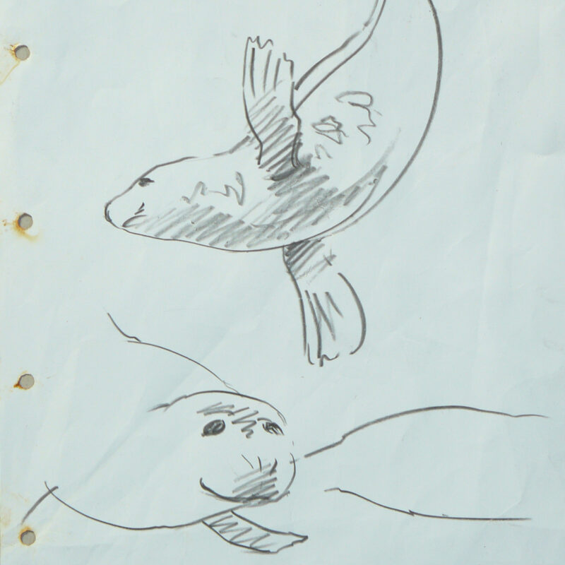 Seal sketch, Chris Rose