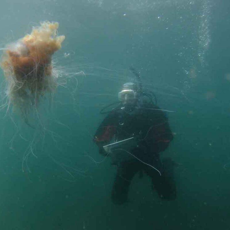 Chris Rose sketching a Jellyfish