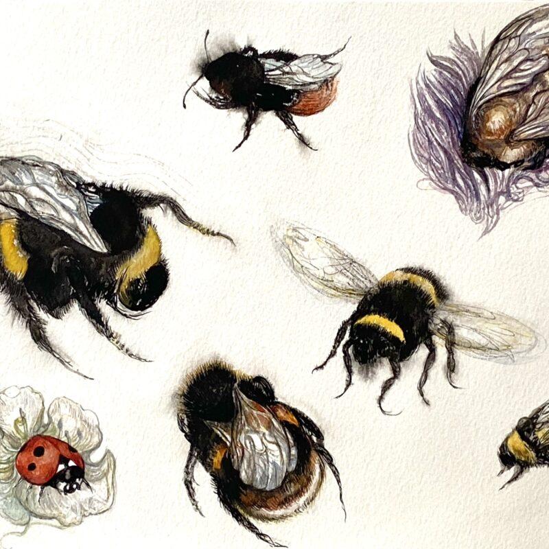 Georgina Coburn, Solitary Bees, Watercolour
