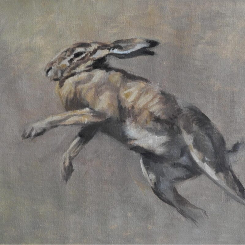 Lepus Pugilistus II by Tim Wootton