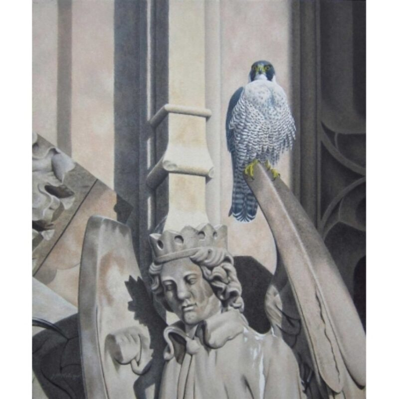 Peregrine Falcon, Victoria Tower, Palace of Westminster by Jan Wilczur