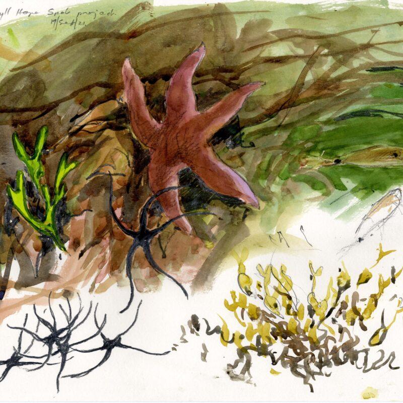 Starfish, brittlestars and seaweed, Bruce Pearson