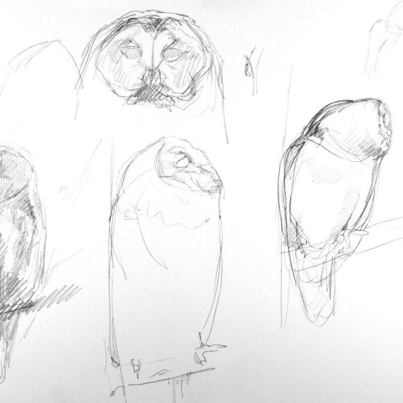 Adrien Brun, Tawny Owl Studies