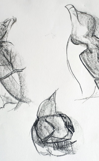 Melanie Mascarenhas, Quick Razorbill Studies, Graphite block on paper