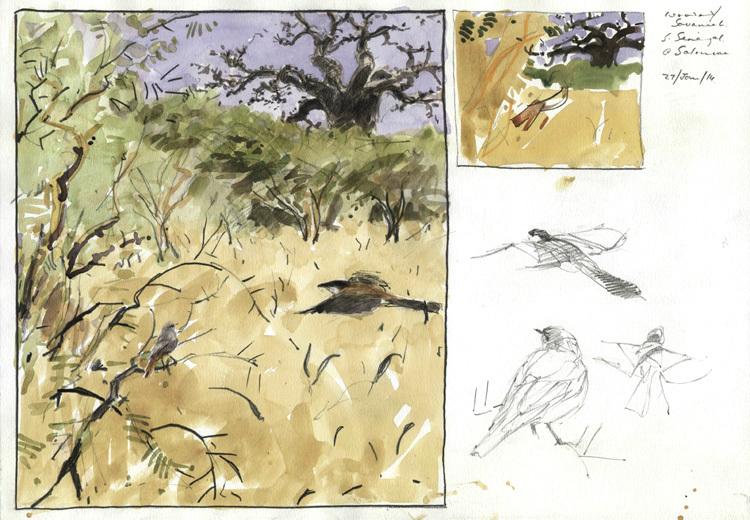 <p>Sahel wintering redstart, Bruce Pearson</p>