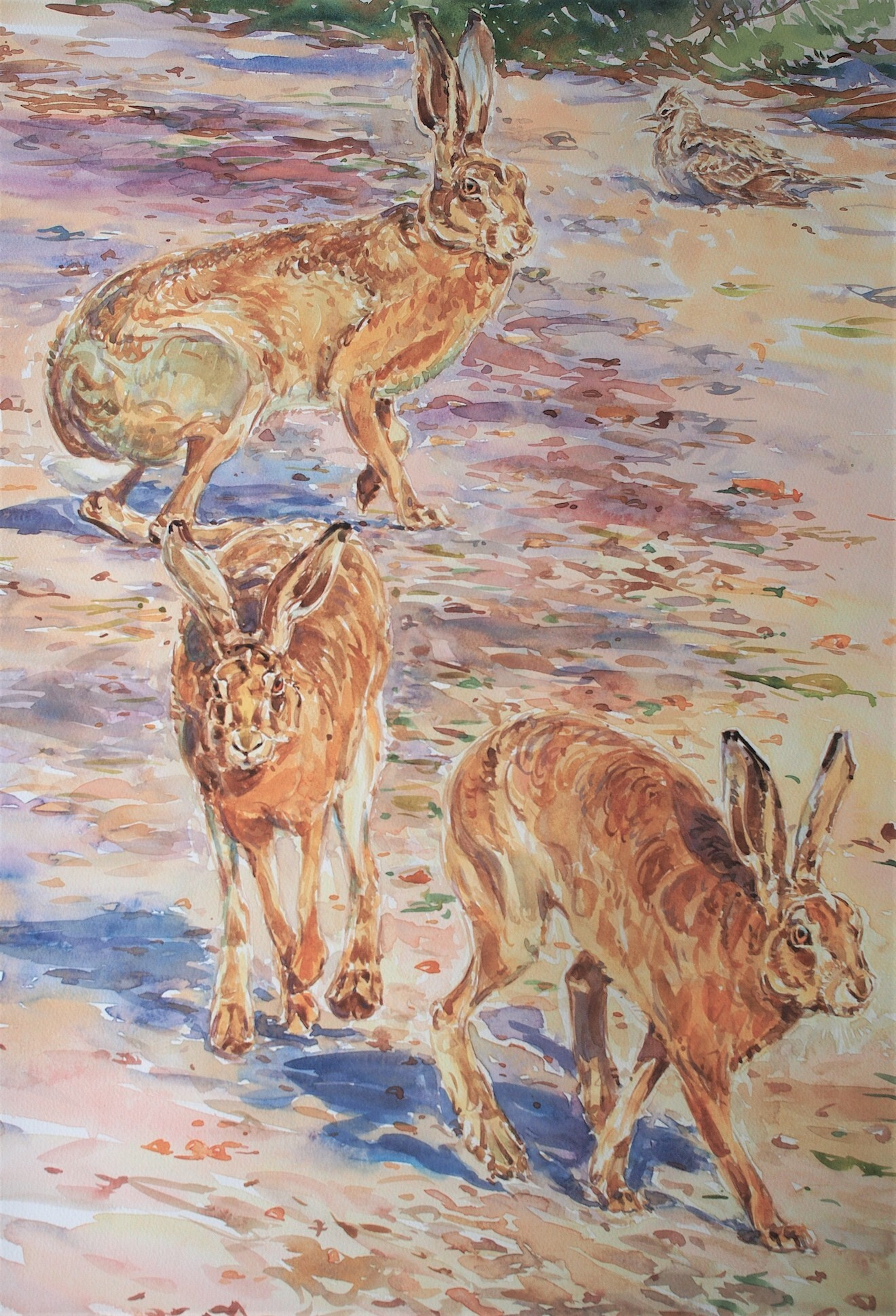 Hares and Skylark by David Bennett