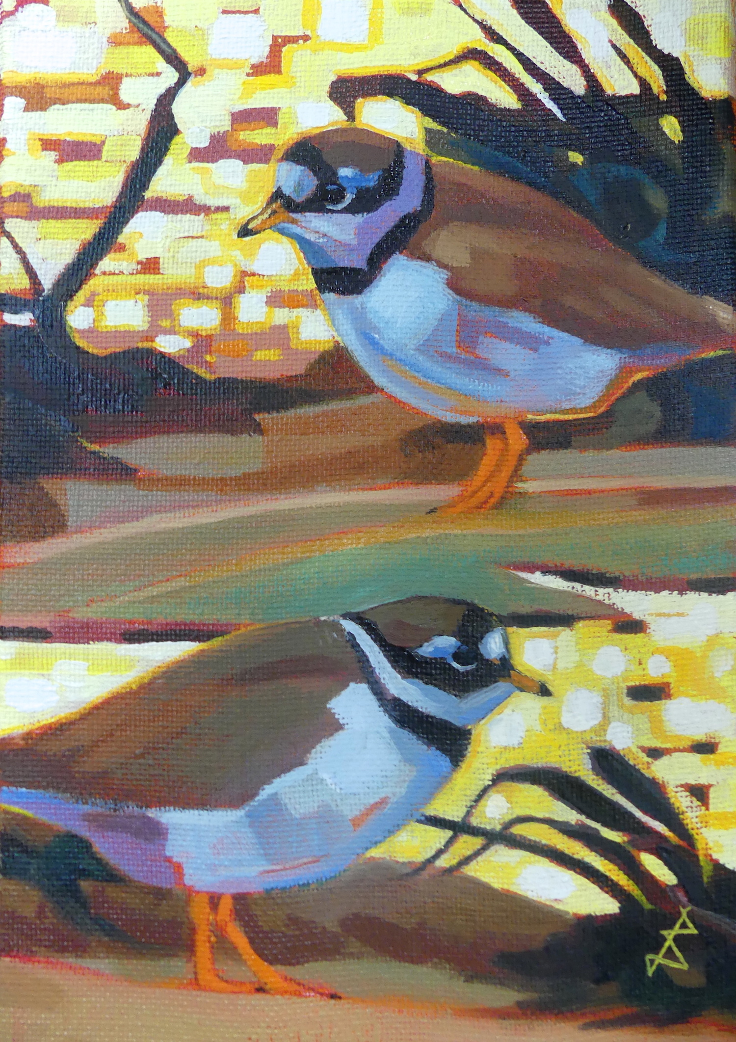 <p>Ringed Plover Last Light by Brin Edwards</p>