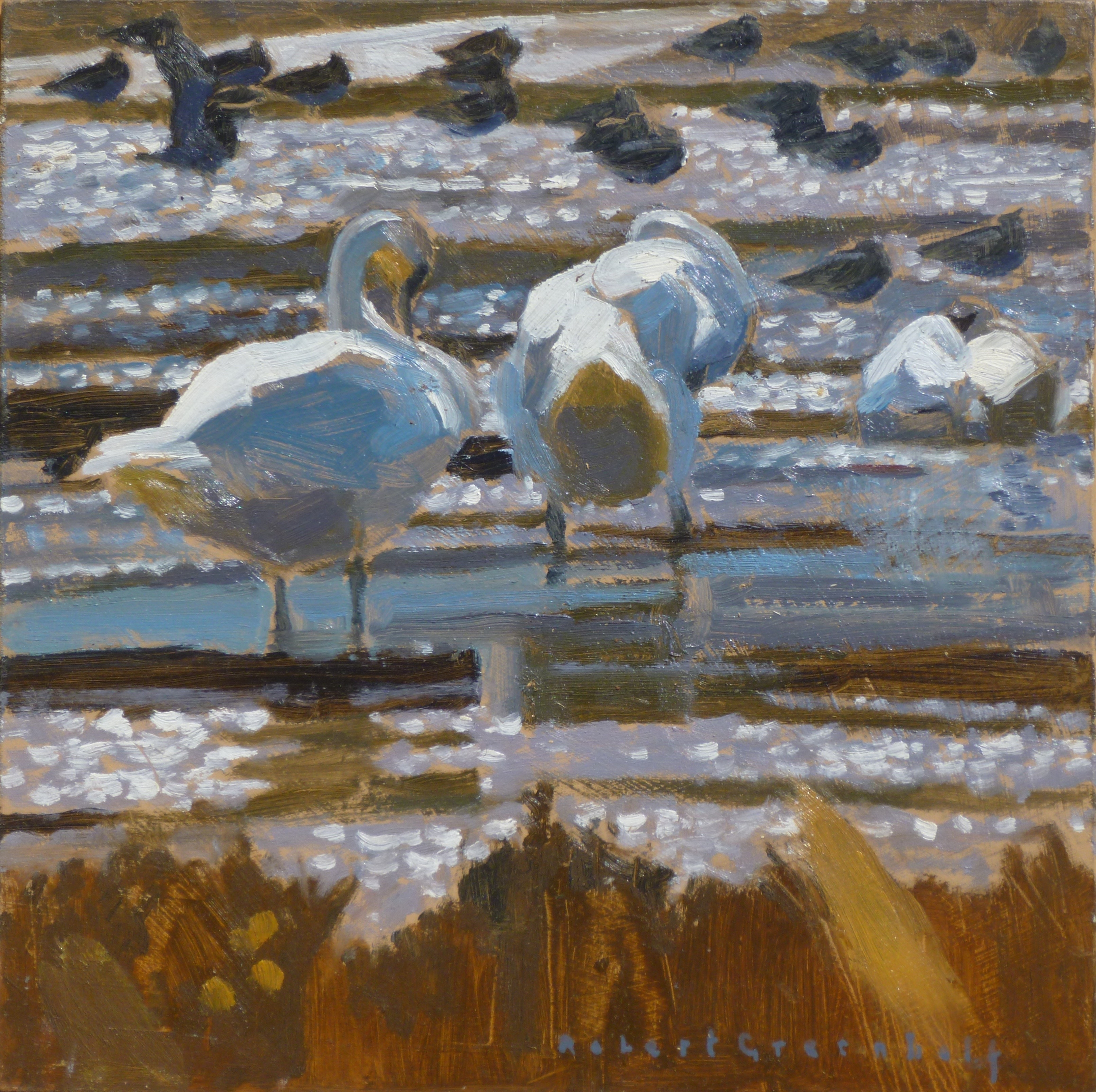 <p>Mute Swans and Lapwing by Robert Greenhalf</p>