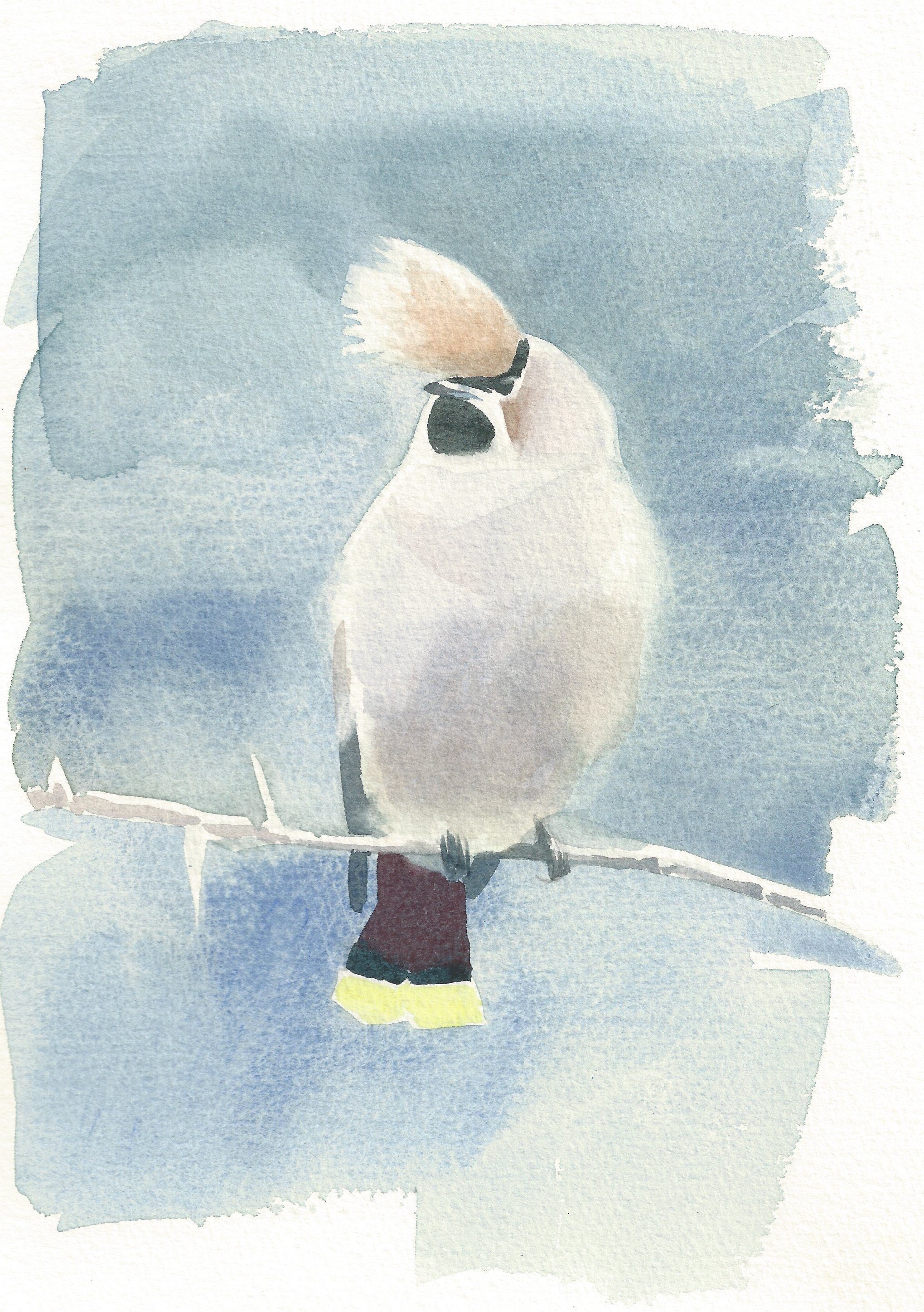 <p>Waxwing with a quiff</p>