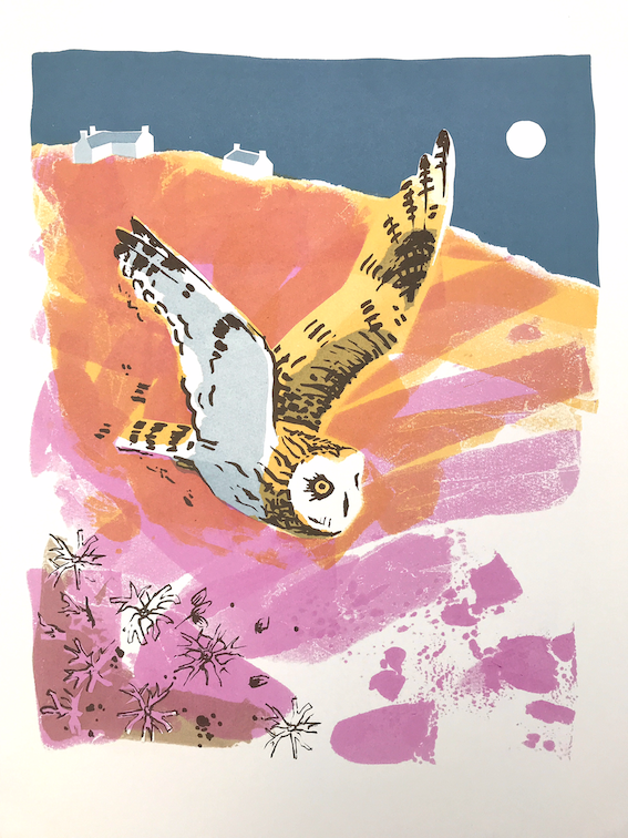 <p>Short-eared Owl and Ragged Robin</p>