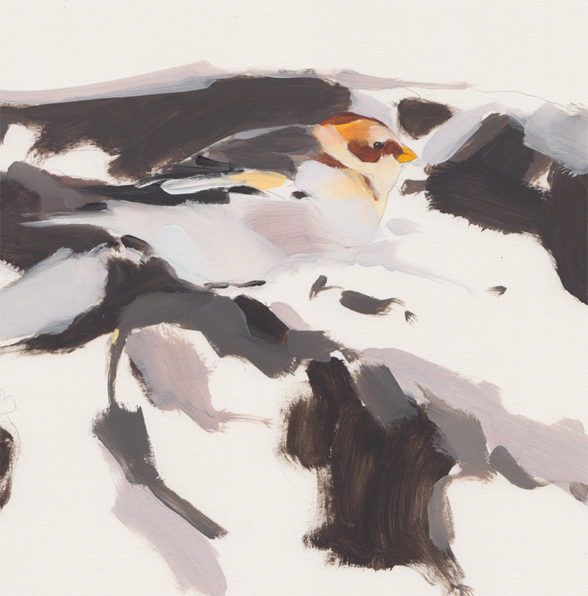 <p>Snowbunting by Esther Tyson</p>