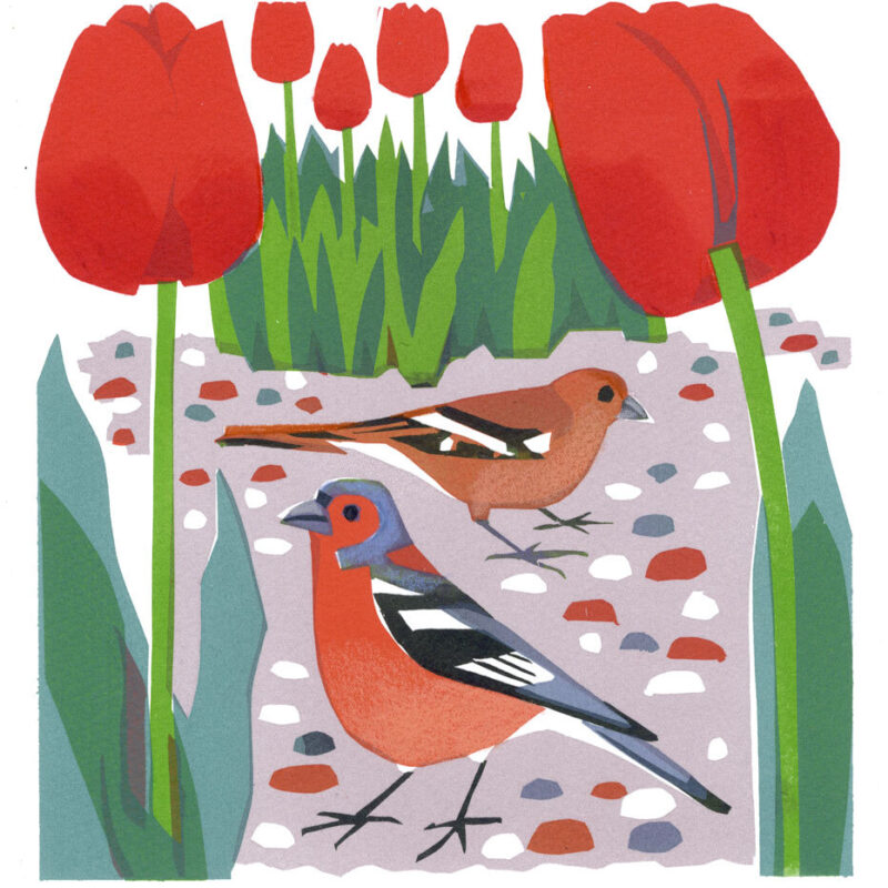 Chaffinch by Carry Akroyd
