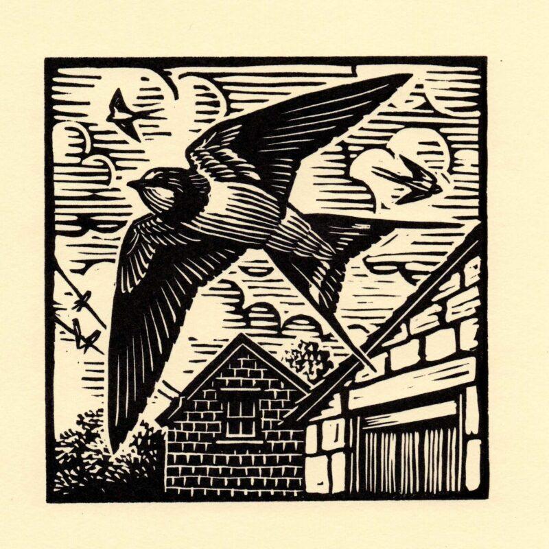 Swallows by Richard Allen