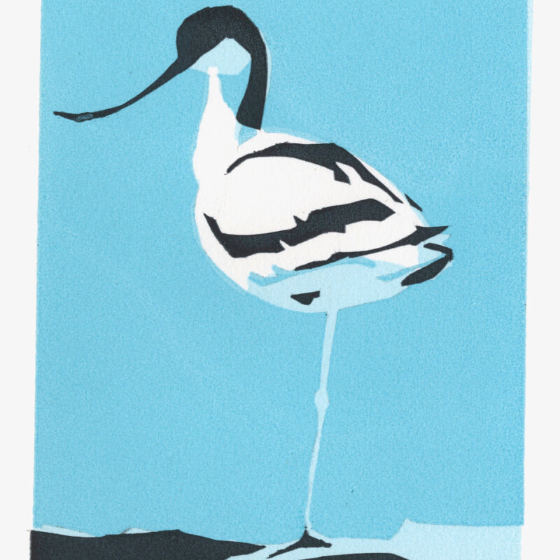 Avocet one by Max Angus