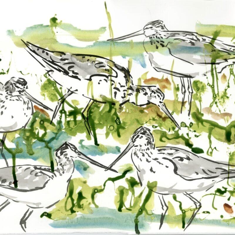 Greenshanks feeding by Marco Brodde