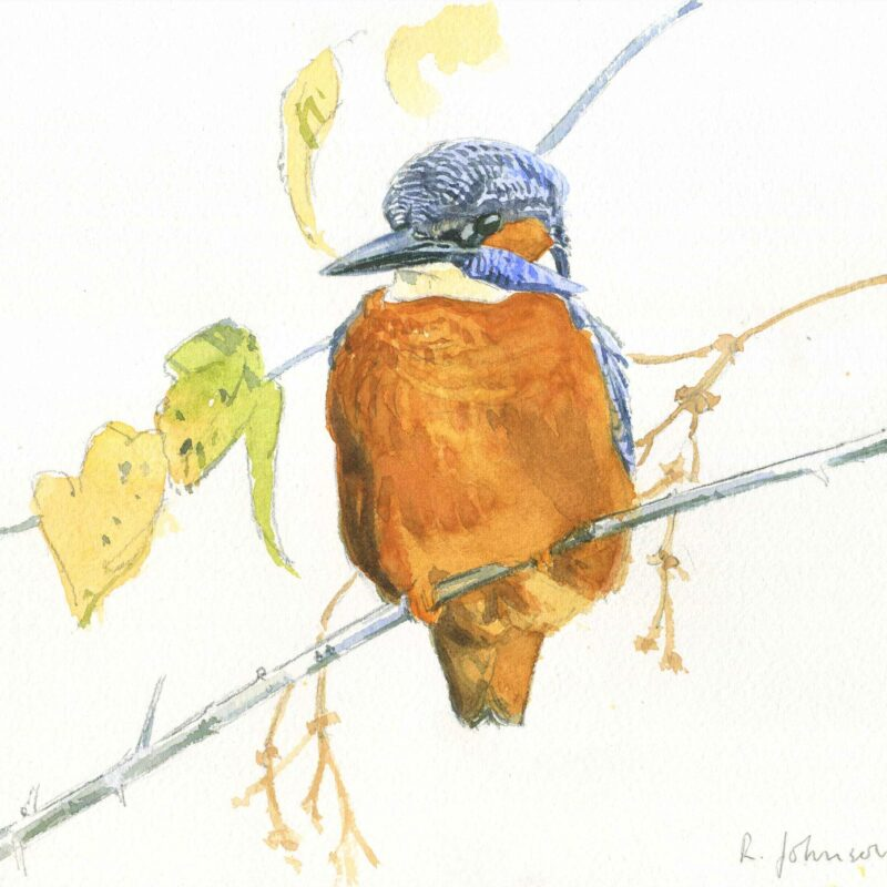 Kingfisher by Richard Johnson