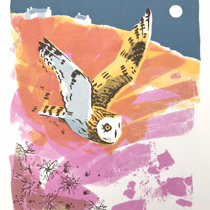 Short-eared Owl and Ragged Robin