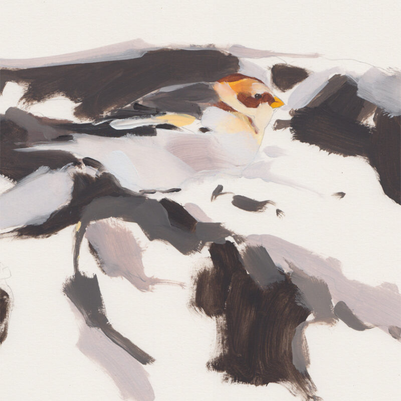 Snowbunting by Esther Tyson