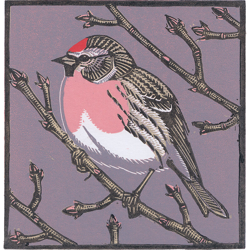 Redpoll by Richard Jarvis