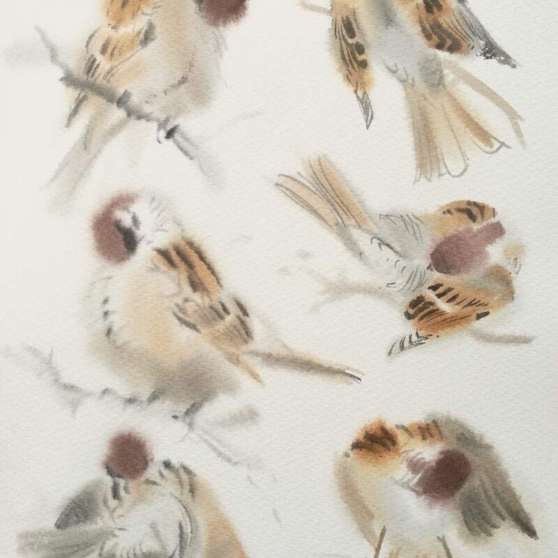 Preening Tree Sparrows by Ben Woodhams