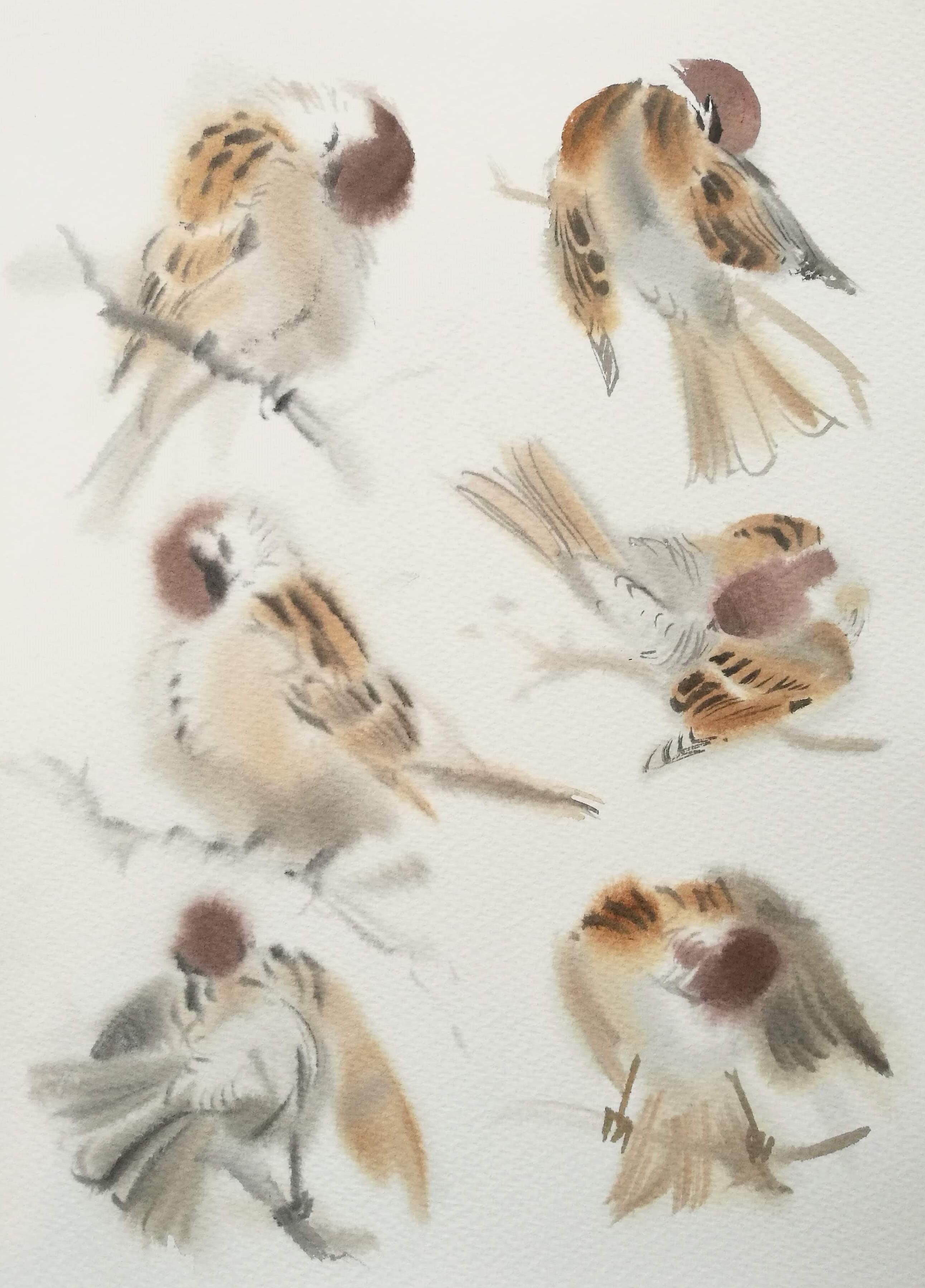 <p>Preening Tree Sparrows by Ben Woodhams</p>