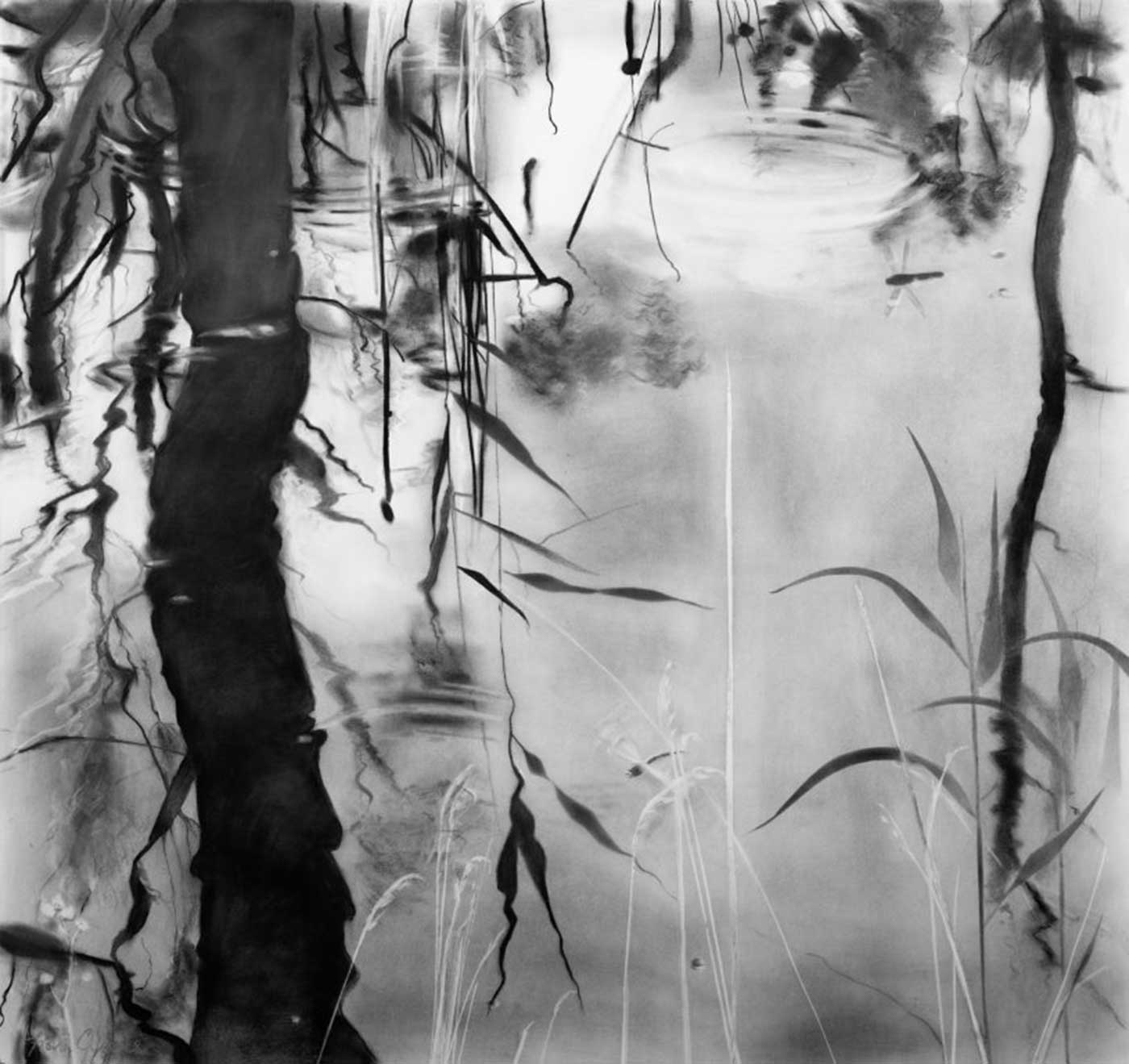Water life, Foulshaw Moss, charcoal on paper