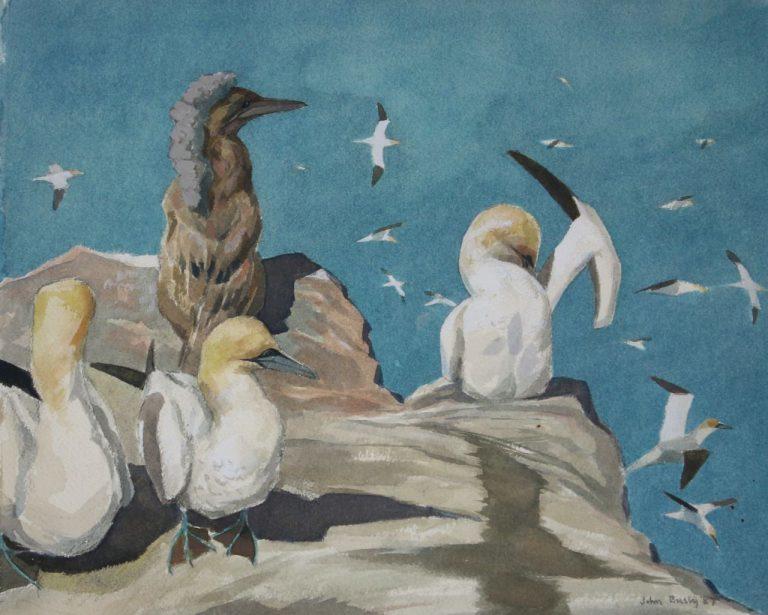 John Busby, Gannets on the Bass,  Watercolour, 1987