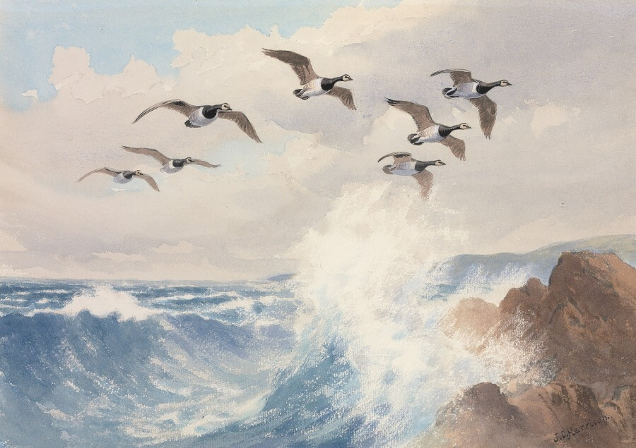 Barnacle Geese in Flight by J.C. Harrison   © Courtesy Rountree Tryon Gallery